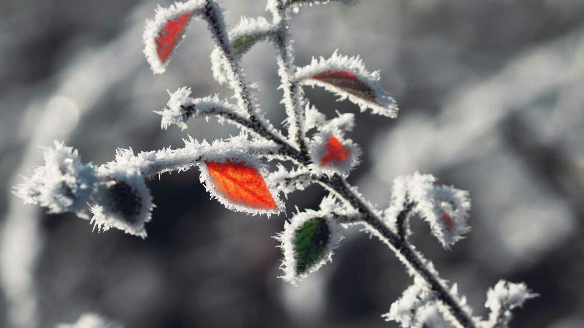 Ganzheitliche Pflege bringt Körper und Seele gut durch den Winter